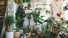 RollingGreens-Plants.jpeg