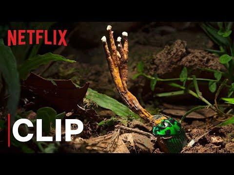 Our Planet | Fungus | Clip | Netflix